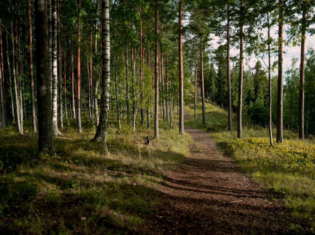 forestDeHart